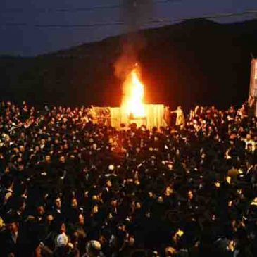 Lag B'Omer – Saving the Thorns