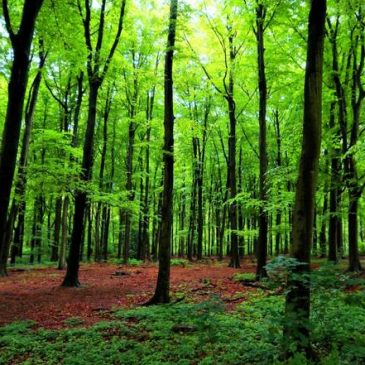 Tu B'Shvat – Tree as Metaphor for Reality
