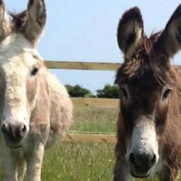 Balak – Donkeys of Destiny
