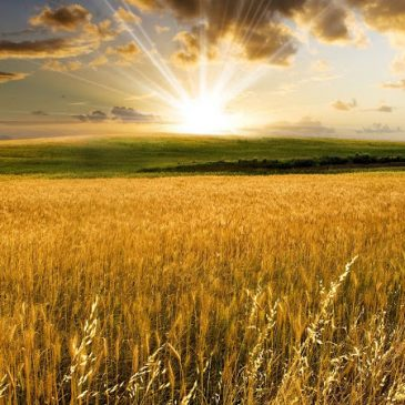 Shavuos – Liberation from the market