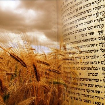Shmitta and Omer – What Holds the Count Together