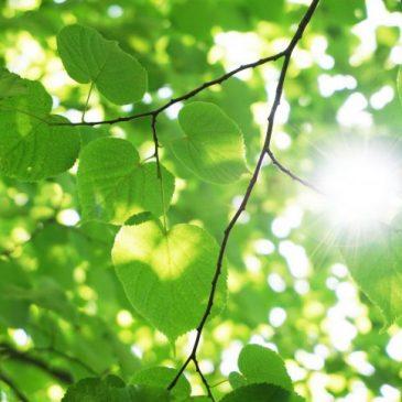 Parsha sheet: Chayei Sarah – Beauty of the Leaves